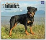 Rottweilers - For the love of - Rottweiler 2017 - 18-Monatskalender mit freier DogDays-App