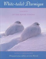 White-Tailed Ptarmigan: Ghosts of the Alpine Tundra