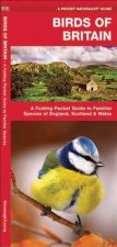 Birds of Britain: A Folding Pocket Guide to Familiar Species of England, Scotland & Wales