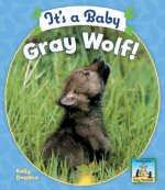 It's a Baby Gray Wolf!