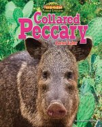 Collared Peccary: Cactus Eater