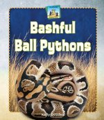 Bashful Ball Pythons