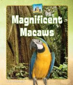 Magnificent Macaws