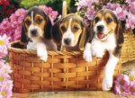 Just Beagles Jigsaw Puzzle