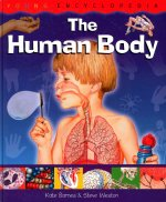The Human Body Why Do We Sweat When We Are Hot? How Do We Fight Germs?