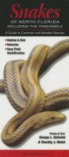 Snakes of Northern Florida Including the Panhandle: A Guide to Common & Notable Species