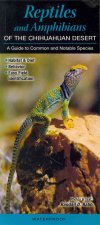 Reptiles and Amphibians of the Chihuahuan Desert: A Guide to Common & Notable Species
