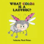 What Color Is a Ladybug?