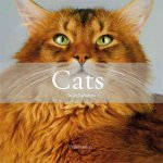 Cats: The Most Beautiful Cats/Cat Tales
