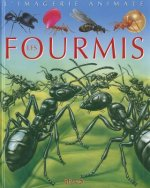 Fourmis - Imagerie Animale