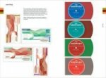 Color Harmony: Layout mit CD