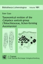 Taxonomical revision of the Caloplaca saxicola group (Teloschistaceae, lichen-forming Ascomycota)