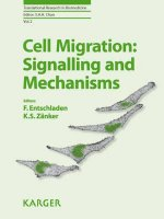 Cell Migration: Signalling and Mechanisms