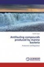 Antifouling compounds produced by marine bacteria