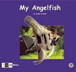 My Angelfish