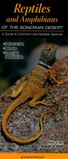 Reptiles and Amphibians of the Sonoran Desert: A Guide to Common & Notable Species