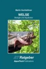 Welse (Siluridae)