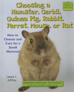 Choosing a Hamster, Gerbil, Guinea Pig, Rabbit, Ferret, Mouse, or Rat