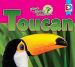 Animals of the Amazon Rainforest: Toucan