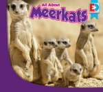 All about Meerkats