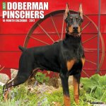 Just Dobermans