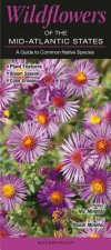 Wildflowers of the Mid-Atlantic States: A Guide to Common Native Species