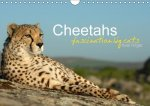 Cheetahs fascinating big cats (Wall Calendar 2017 DIN A4 Landscape)