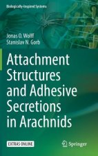 Attachment Structures and Adhesive Secretions in Arachnids