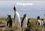 Pinguine in Patagonien (Wandkalender 2017 DIN A2 quer)