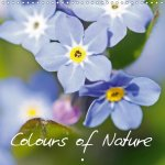 Colours of Nature (Wall Calendar 2017 300 × 300 mm Square)