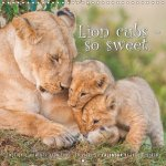 Emotional Moments: Lion Cubs - So Sweet 2017