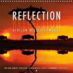 Emotional Moments: Reflection - African Wildlife Images 2017