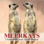 Meerkats - Charismatic and Clever Animals 2017