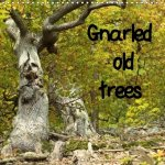 Gnarled Old Trees 2017