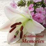 Sentimental Memories 2017