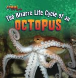 The Bizarre Life Cycle of an Octopus