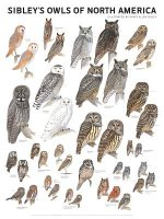 Sibleys Owls of North America