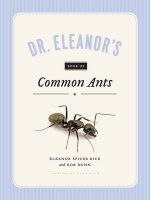 DR ELEANORS BK OF COMMON ANTS