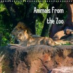 Animals from the Zoo 2017