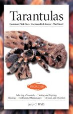 TARANTULAS (ADVANCED VIVARIUM