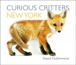 CURIOUS CRITTERS NEW YORK