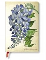 PAINTED BOTANICALS BLOOMING WISTERIA MIN