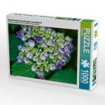 Gartenhortensie (Hydrangea macrophylla) (Puzzle)