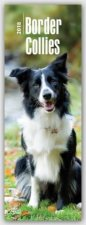 Border Collies 2018
