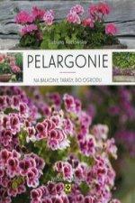 Pelargonie na balkony, tarasy, do ogrodu