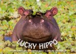 Emotional Moments: Lucky Hippo / UK-Version 2018