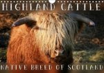 Highland Cattle - Native Breed of Scotland 2018