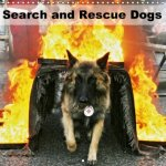 Search and Rescue Dogs 2018