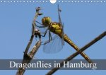 Dragonflies in Hamburg 2018