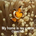 My Home is My Castle - Clown Fish 2018